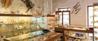 Музей ракушек