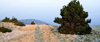 Видова гора на острове Брач
