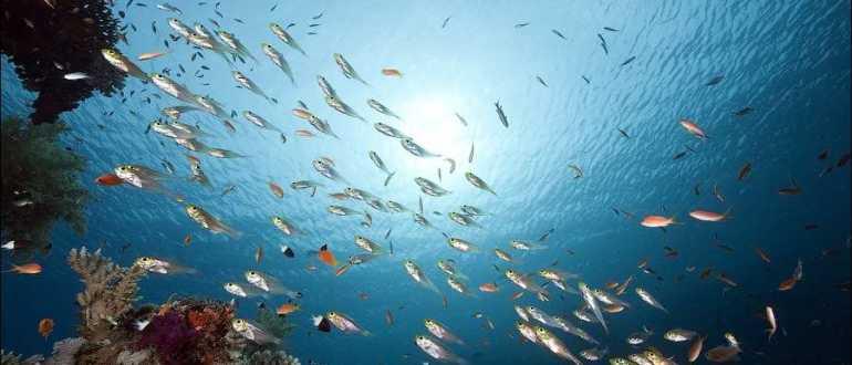 Морские обитатели Хорватии
