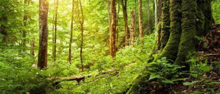 Буковый лес в Хорватии